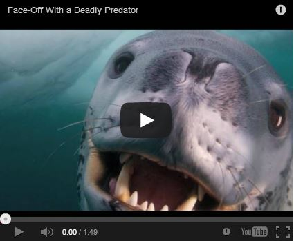 Face off a deadly predator